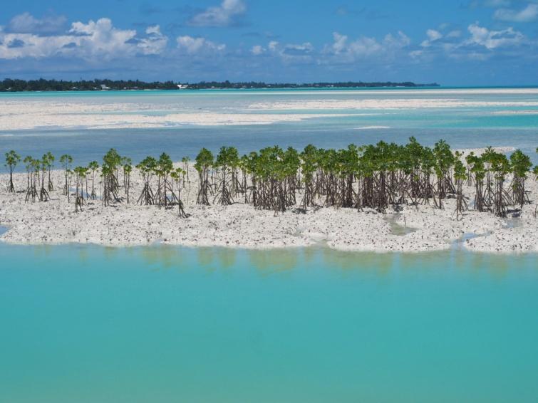 Mangóültetéssel igyekeznek megakadályozni az eróziót Kiribatin