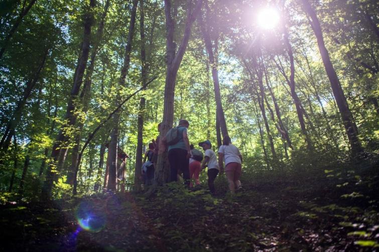 Kincset rejtő erdő tanösvény