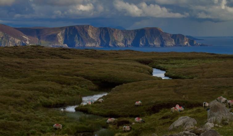 Az írországi Achill-sziget birkákkal.